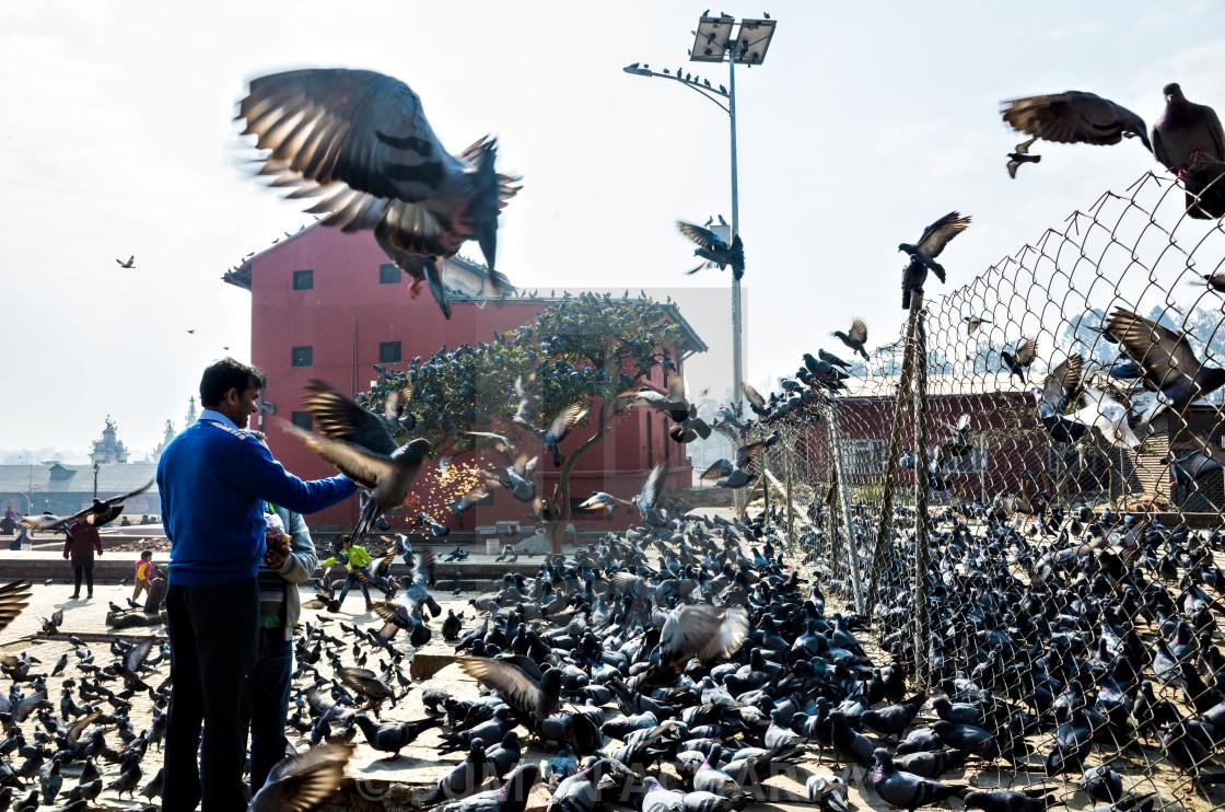"""Feeding Pigeons"" stock image"