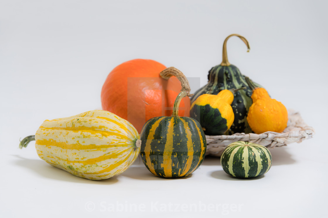 """Various ornamental pumpkins"" stock image"