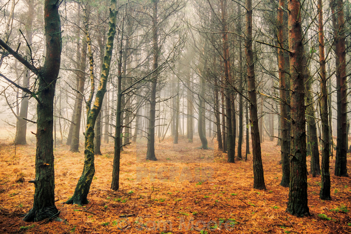 """Woods of Ashdown"" stock image"