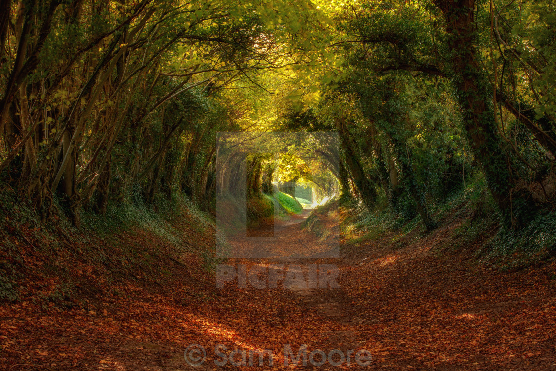 """Autumnal Tunnel"" stock image"