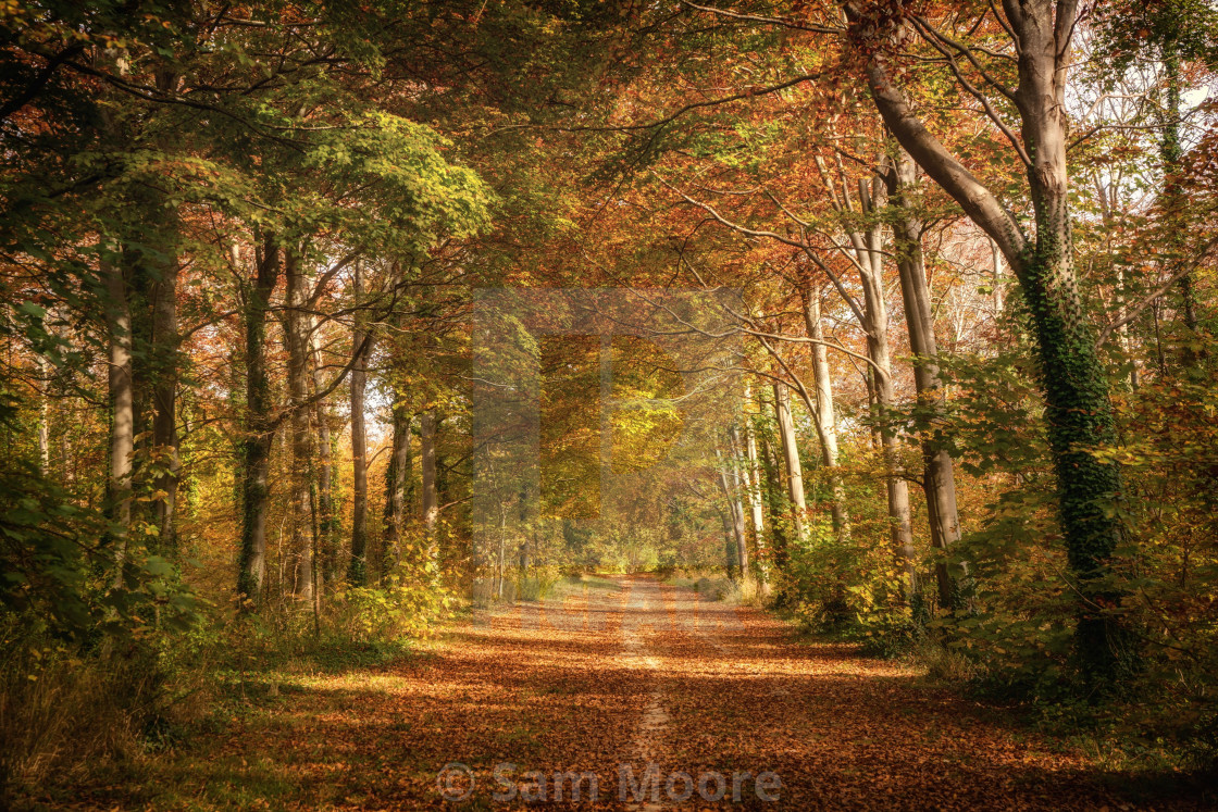 """Pathway to Autumn"" stock image"