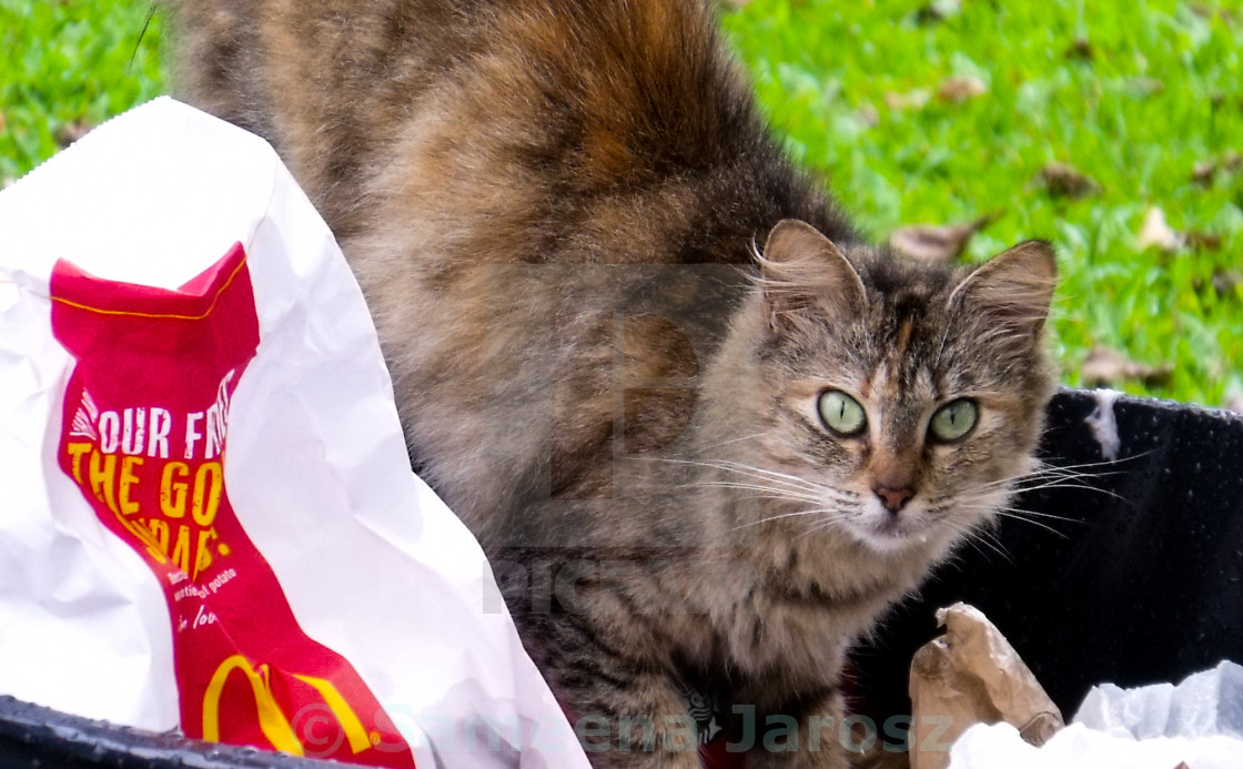 """8 out of 10 cats prefer fast food"" stock image"