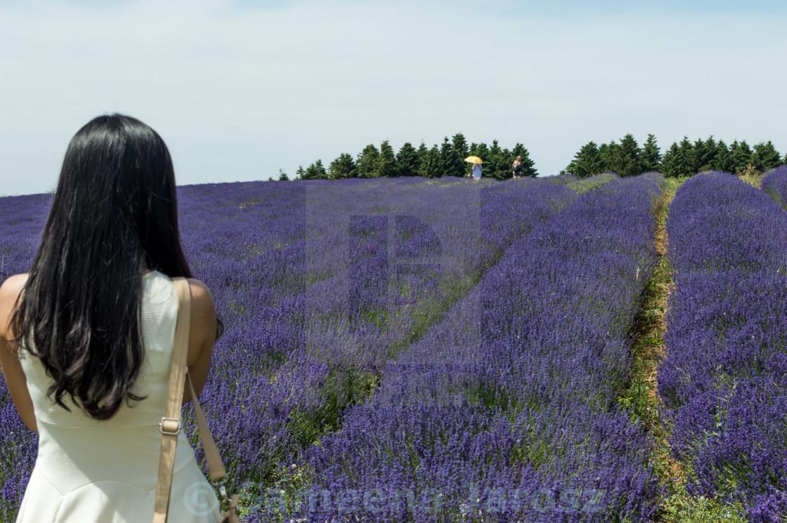 """""""Girl in lavender field"""" stock image"""