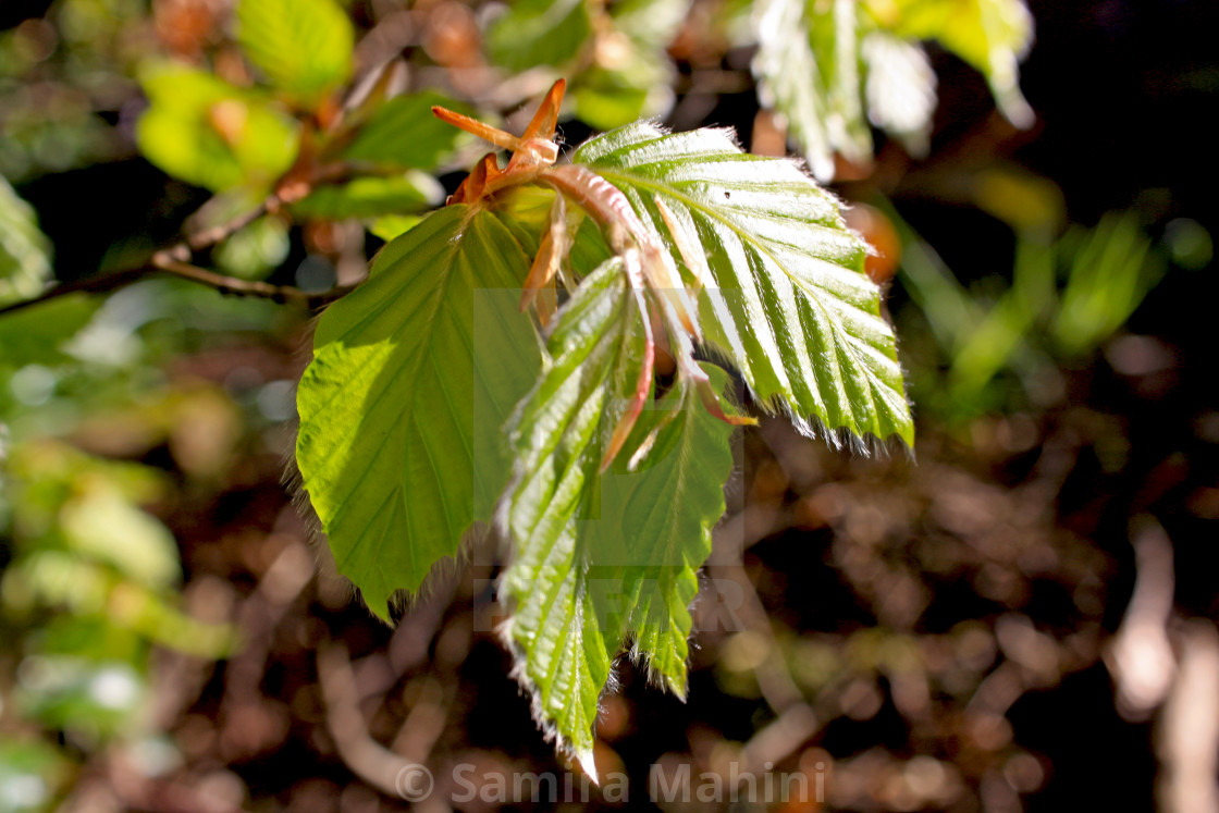 """""""Leaves"""" stock image"""