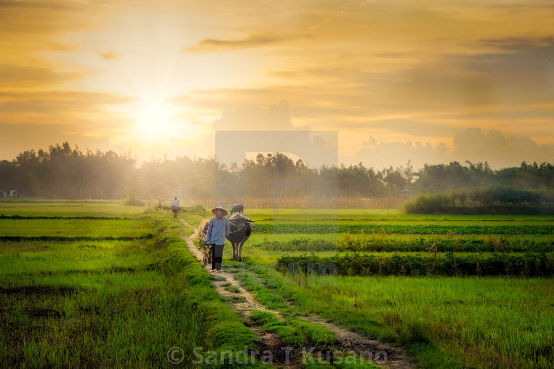 """The End of the Harvest 