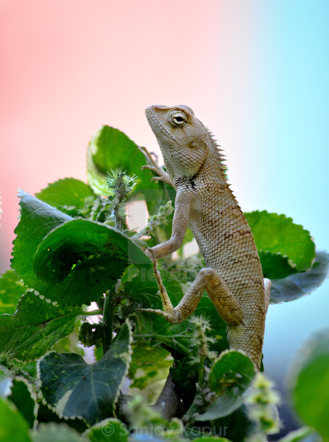 """Garden Lizard Vertical"" stock image"