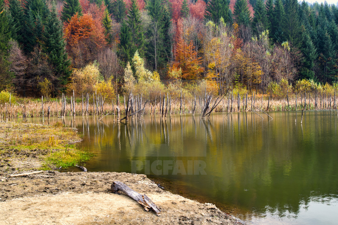 Dead tree trunks reflecting in water - License, download or