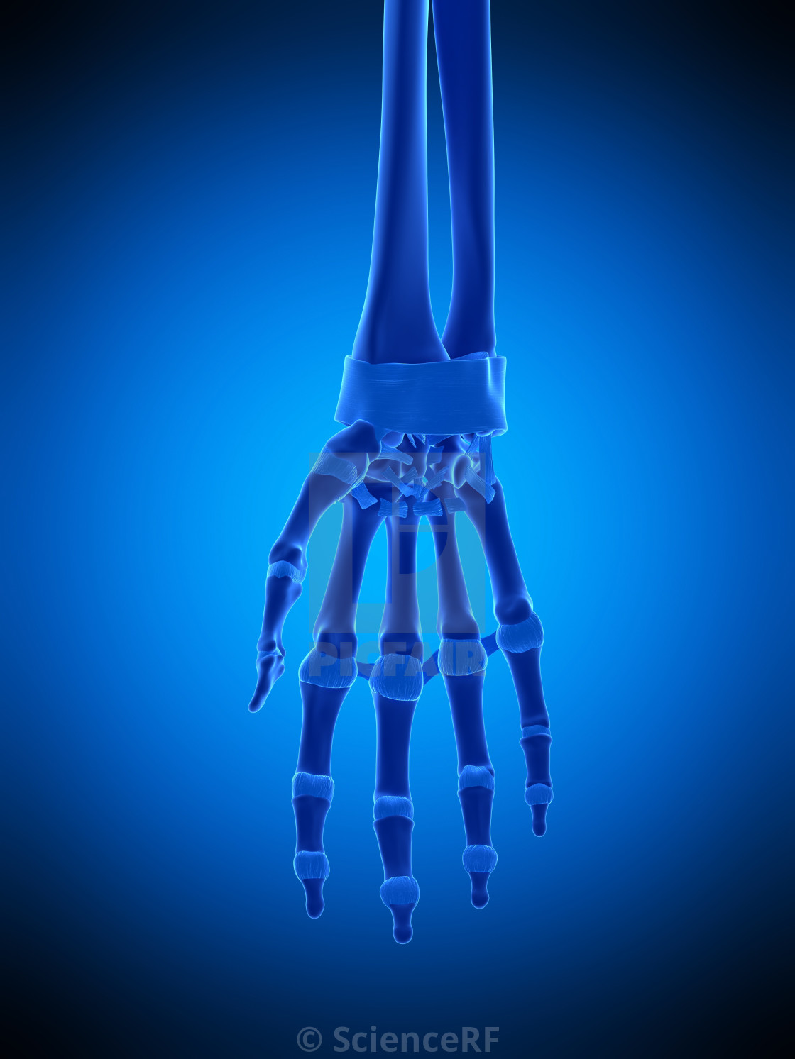 Hand Ligaments Illustration License For 3900 On Picfair