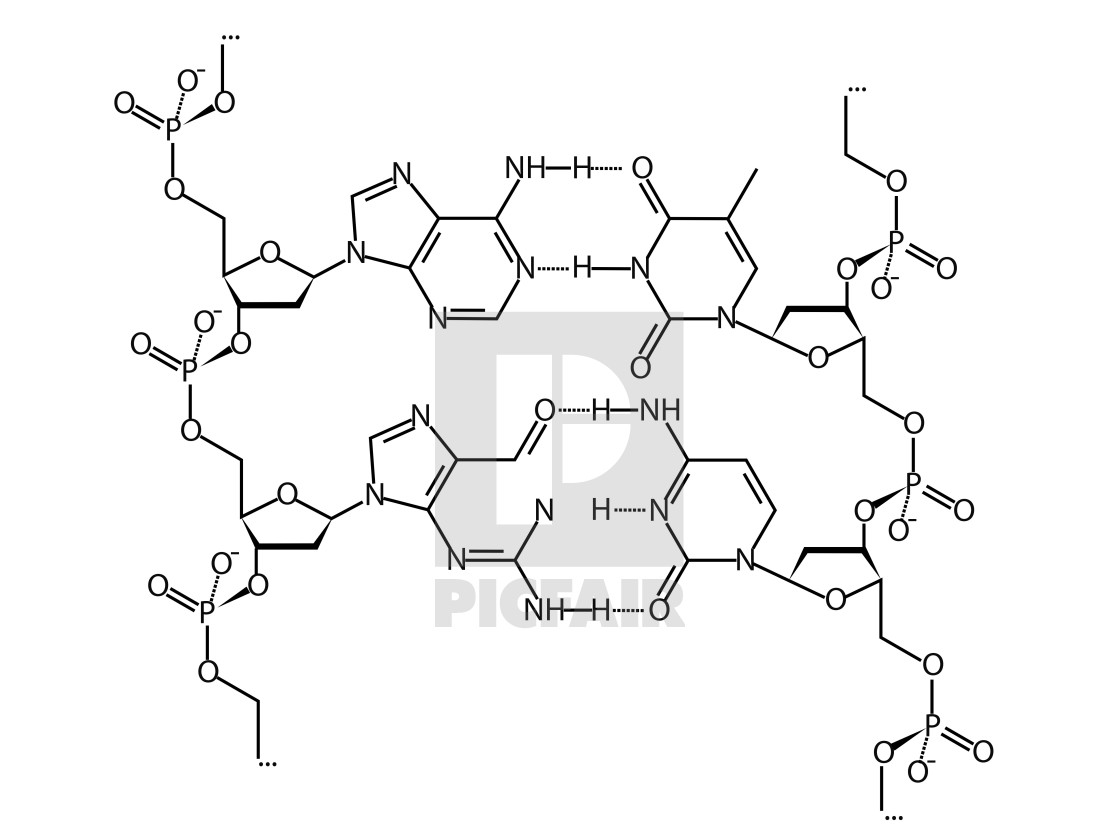 Dna Chemical Structure Formula License Download Or Print