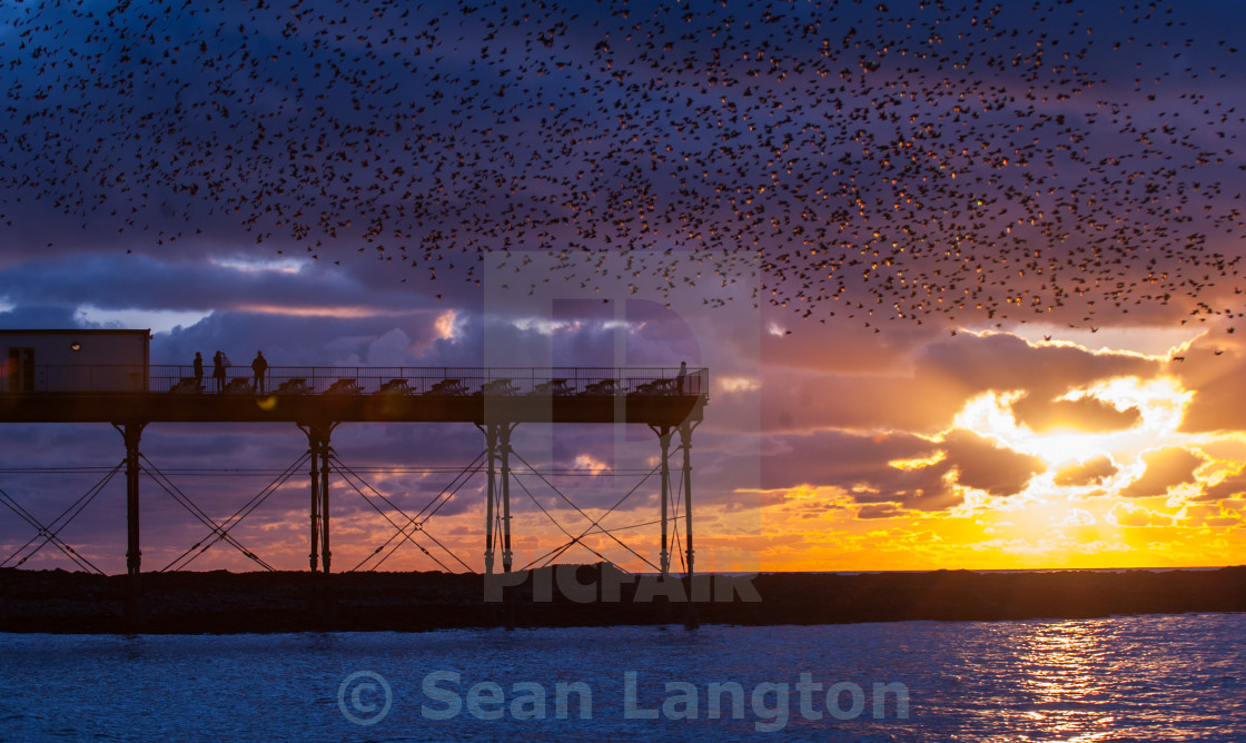 """Starling Dance"" stock image"