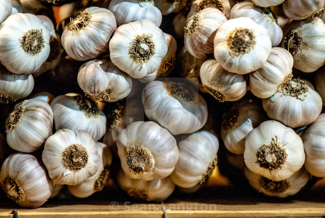 """Garlic"" stock image"