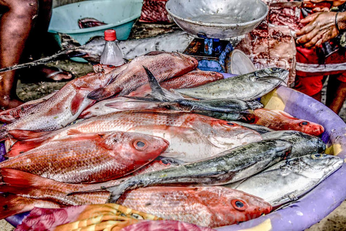 """At the fish market"" stock image"