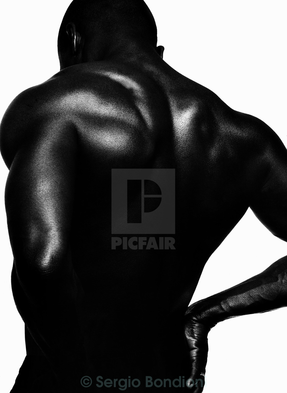 """Blackback"" stock image"