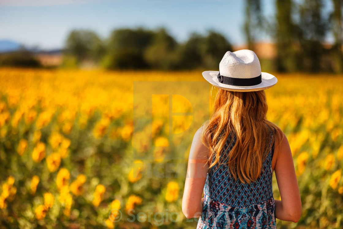 """""""Sunflowers time"""" stock image"""