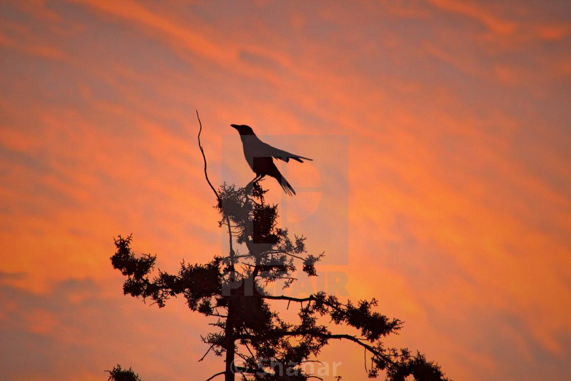 """""""Bird in the sunrise"""" stock image"""
