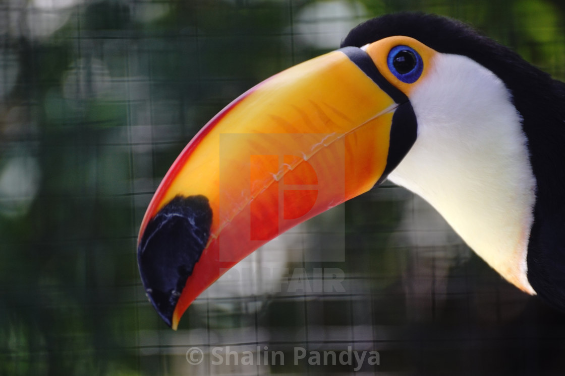"""Toucan"" stock image"