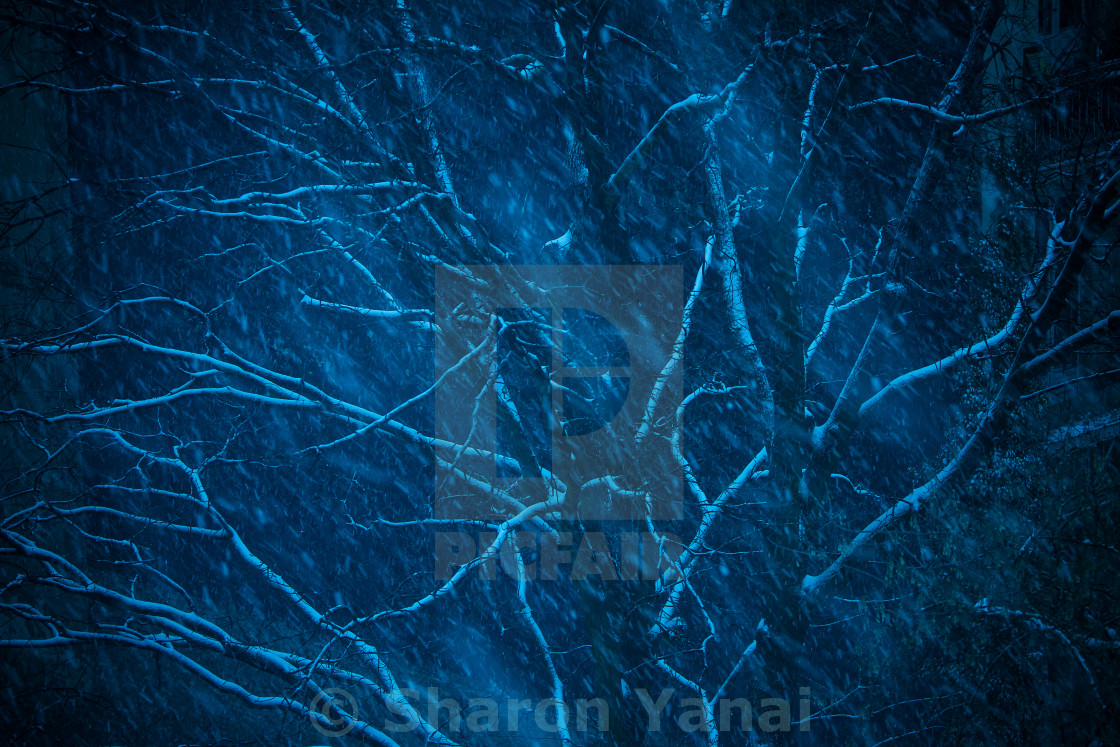 """Tree in the snow at night on blue"" stock image"