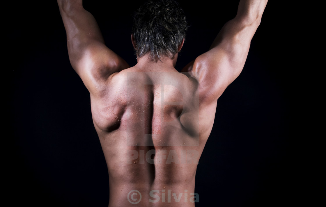 """Bodybuilder back"" stock image"