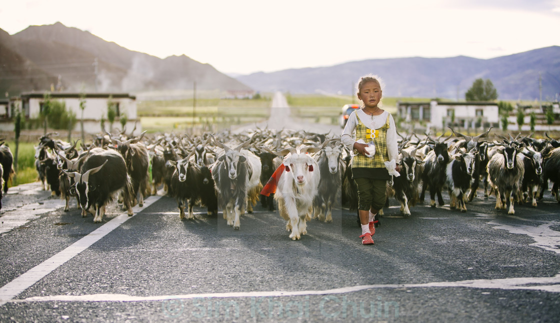 """Young Tibetan Shepherd"" stock image"