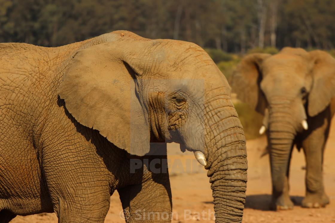 """""""Elephant Pals"""" stock image"""