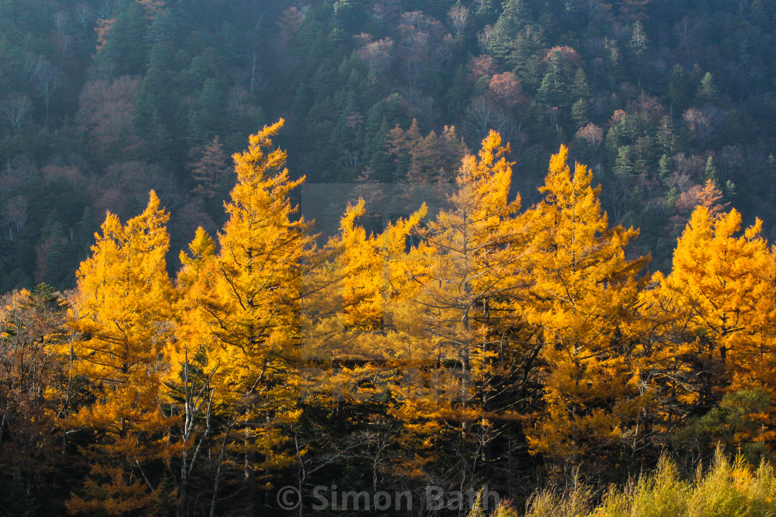 """Autumn Colours, Japan Two"" stock image"