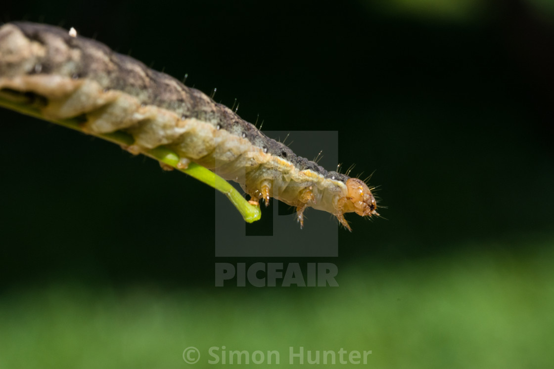 """Macro shot of a caterpillar"" stock image"