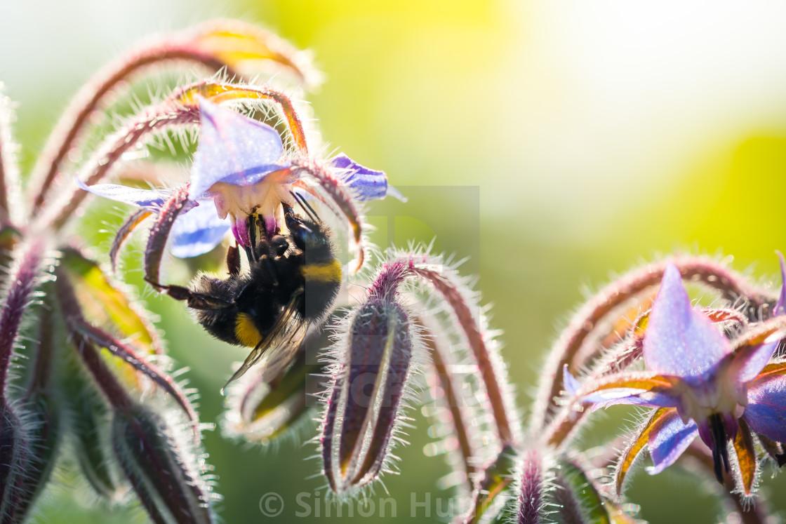 """""""Bee working hard to get pollen"""" stock image"""