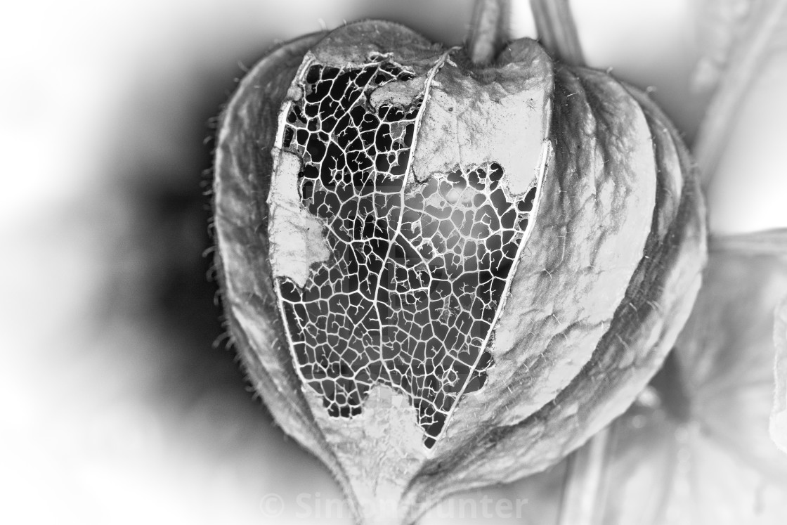 """Chinese Lantern in black and white"" stock image"