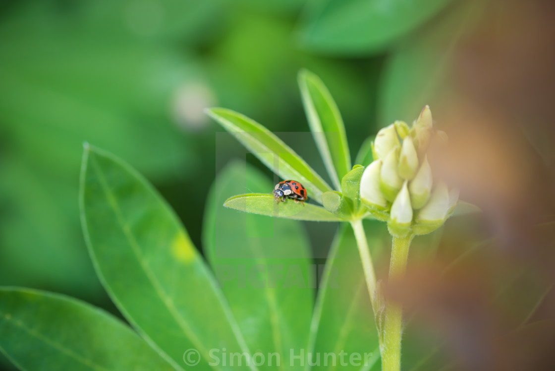 """Lonely Ladybird"" stock image"