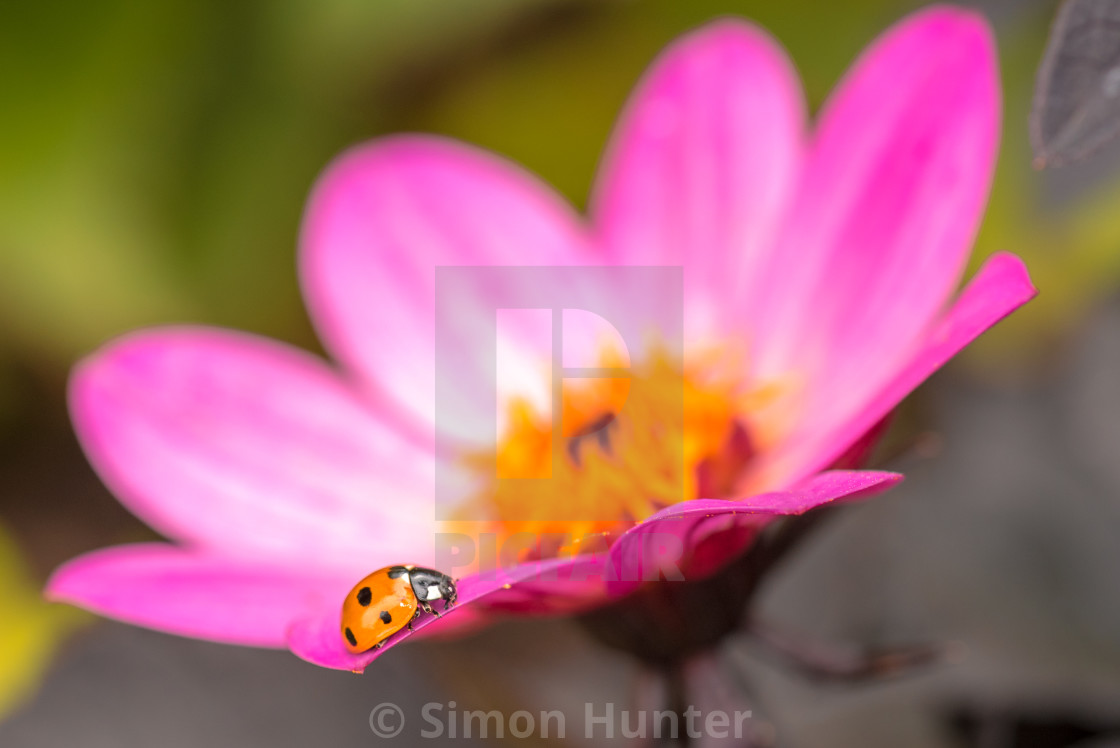 """Ladybird on the edge"" stock image"