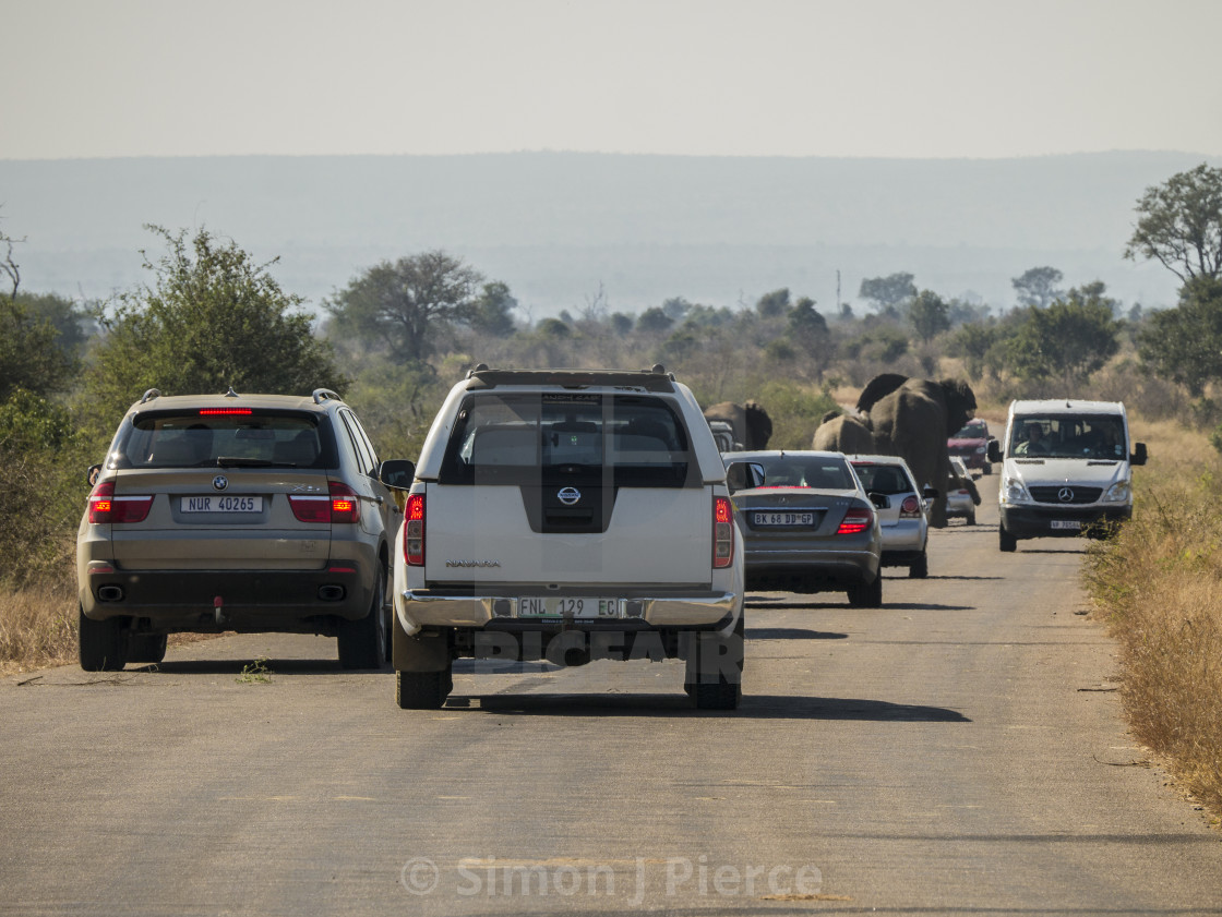 """Trouble With Tourism: An Elephant Roadblock in Kruger National Park, South Africa"" stock image"