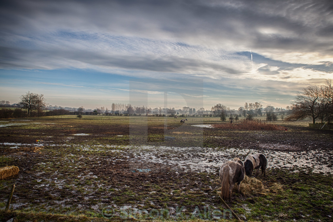 """Muddy Yorkshire Field in Winter"" stock image"