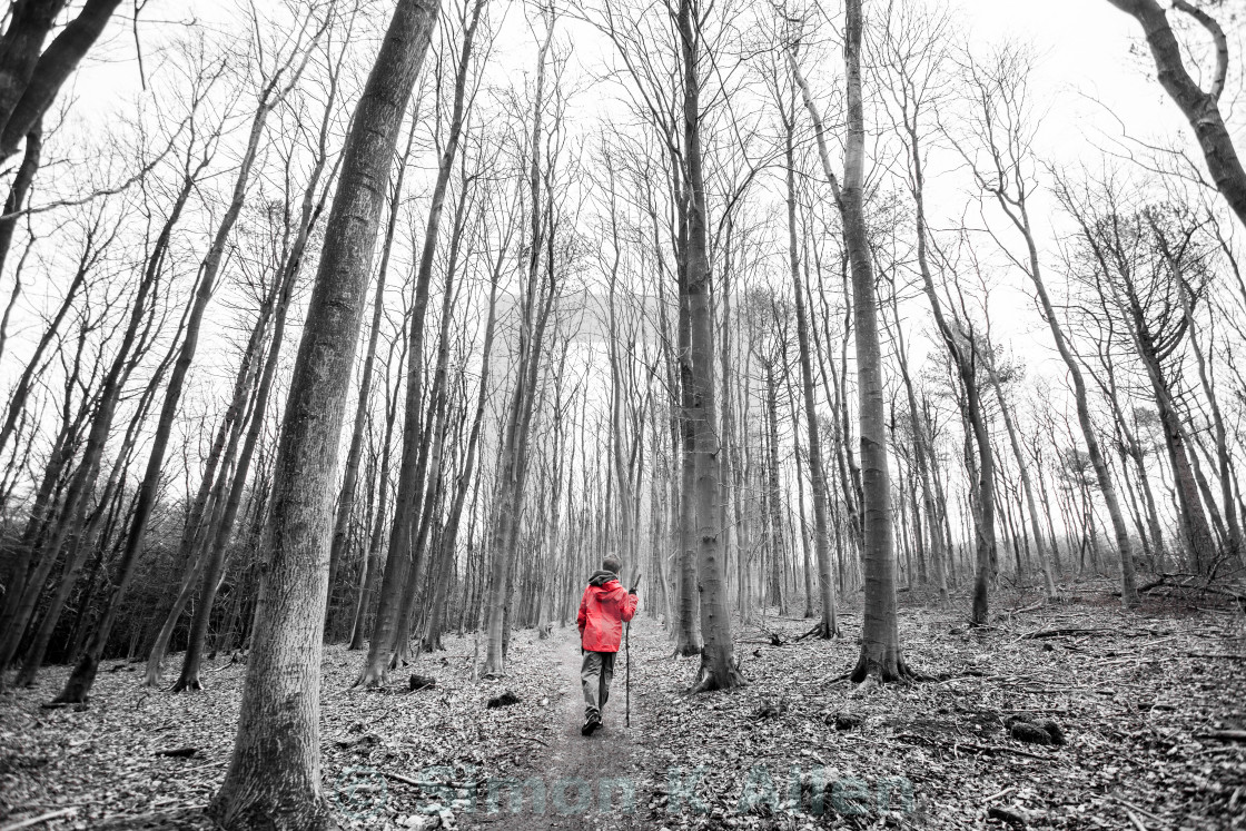 """""""Solitary Boy in the Woods"""" stock image"""