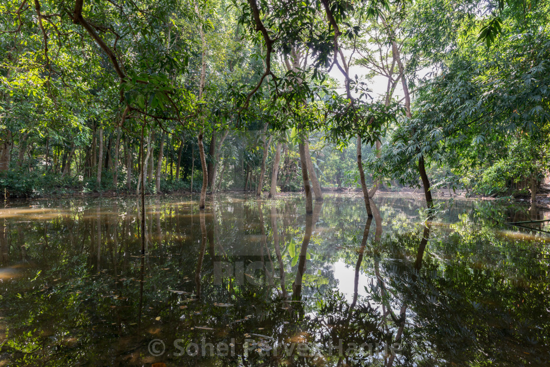 """Forest River Reflections"" stock image"