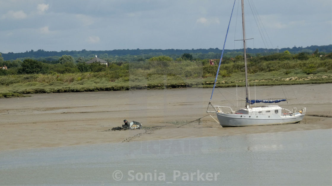 """Bait Digging in Maldon Mud"" stock image"