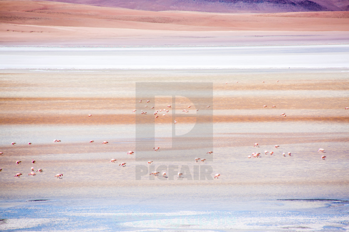 """Red Lagoon Flamingos"" stock image"