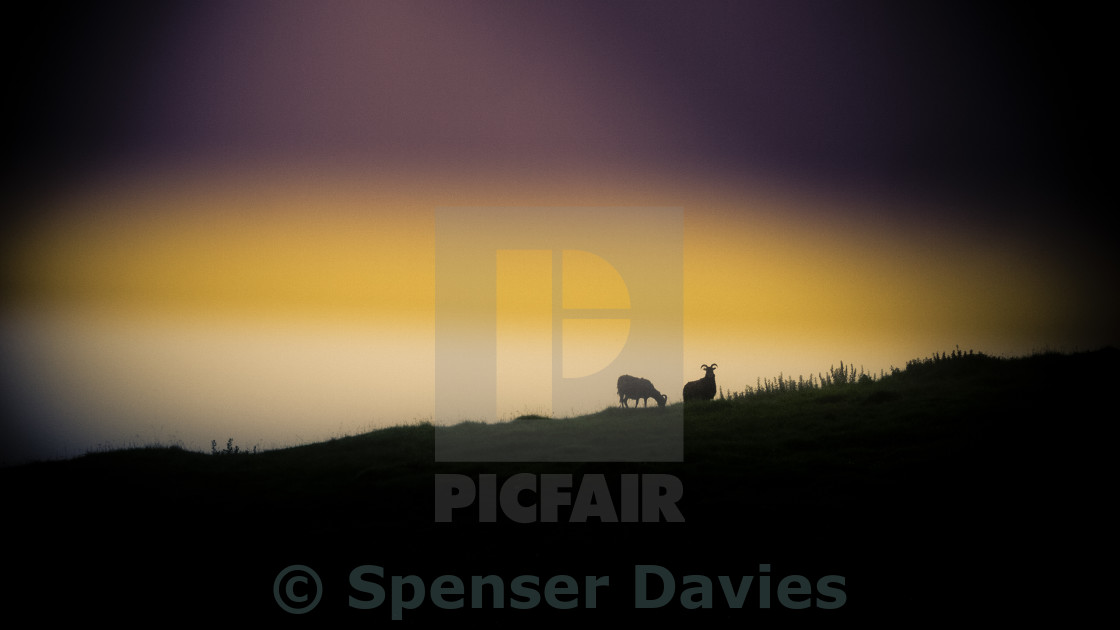 """Mountain sheep"" stock image"