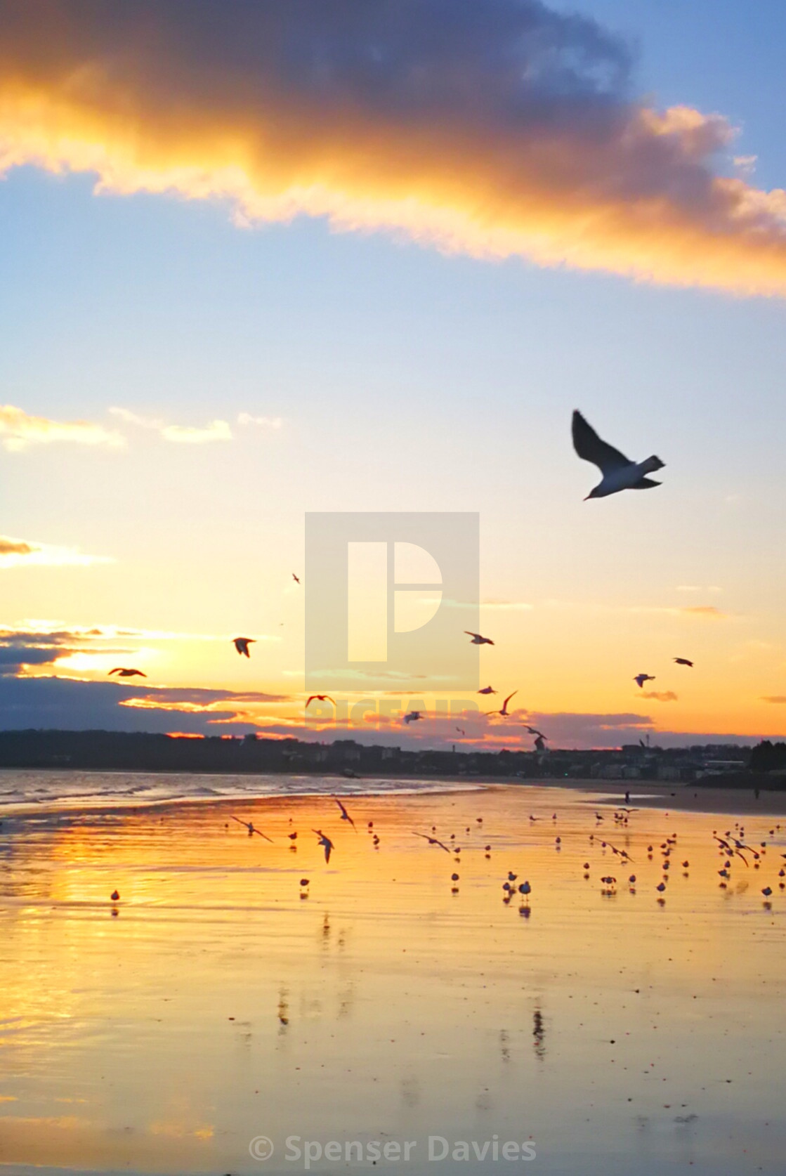 """Birds on the beach"" stock image"