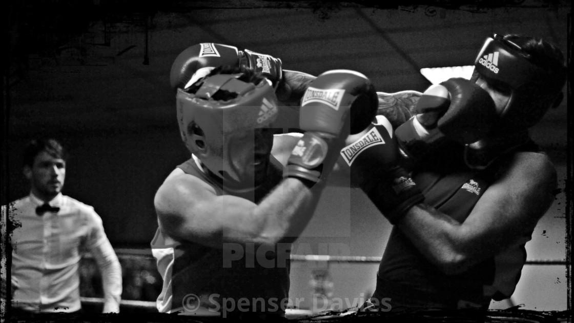 """Boxers"" stock image"