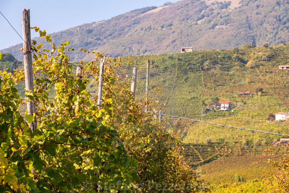 The famous Prosecco vineyards (Nortern Italy, Veneto Region