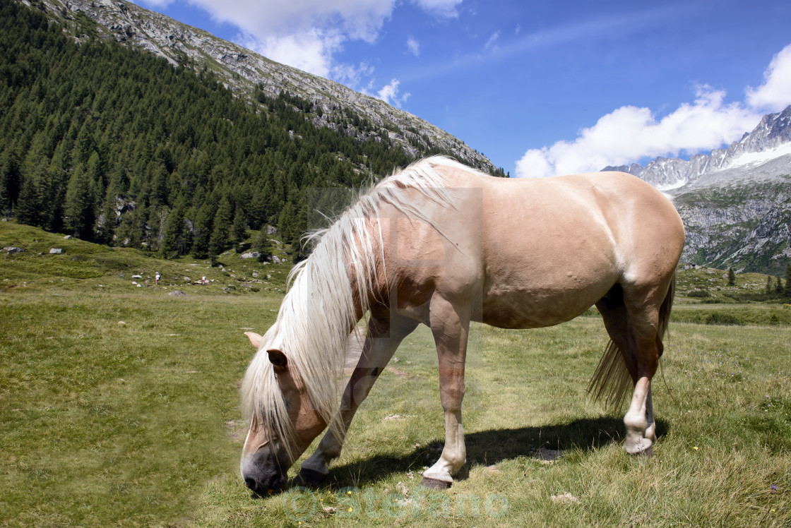 """Grazing Horse"" stock image"