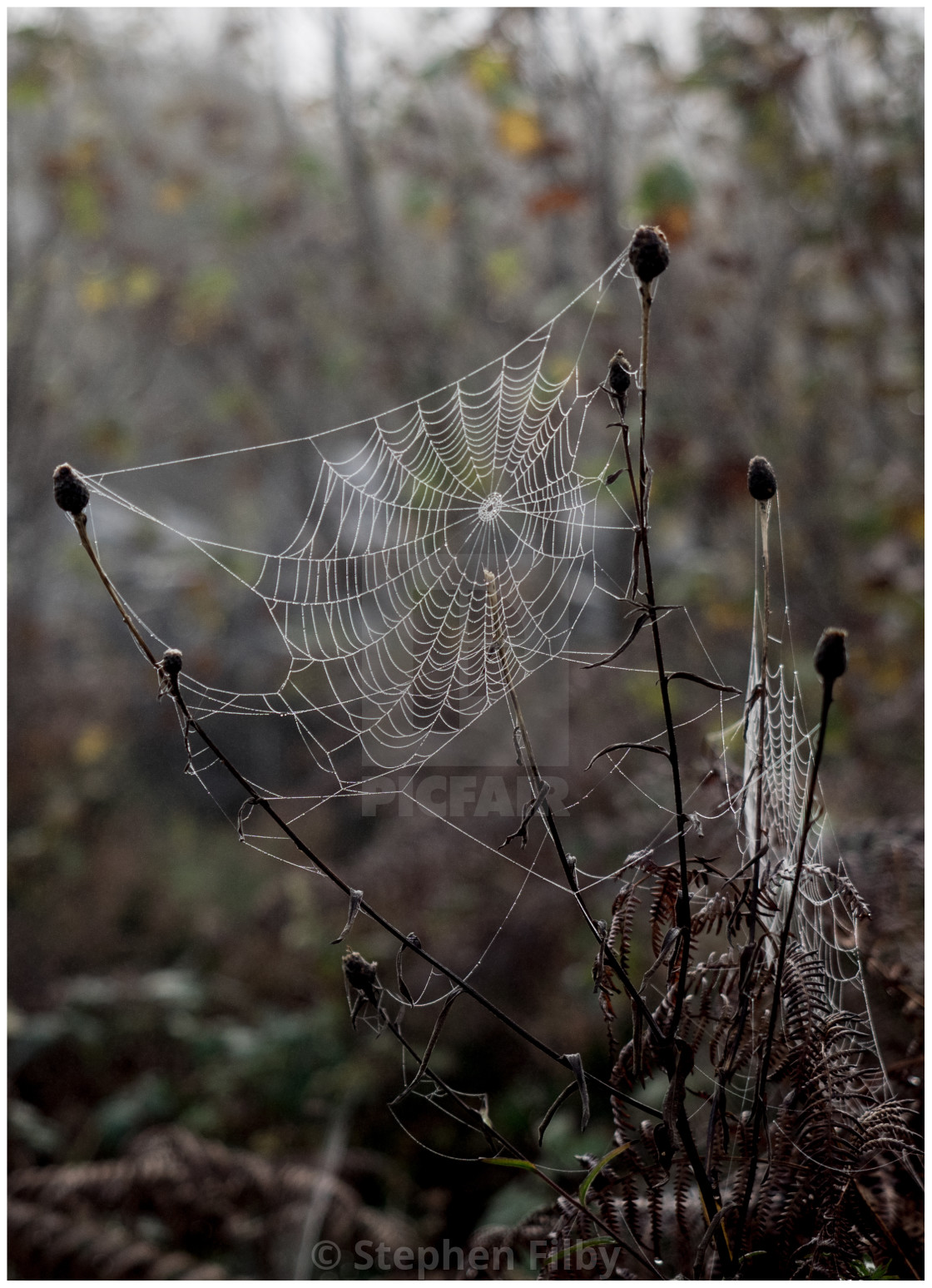 """Spiders web number three"" stock image"