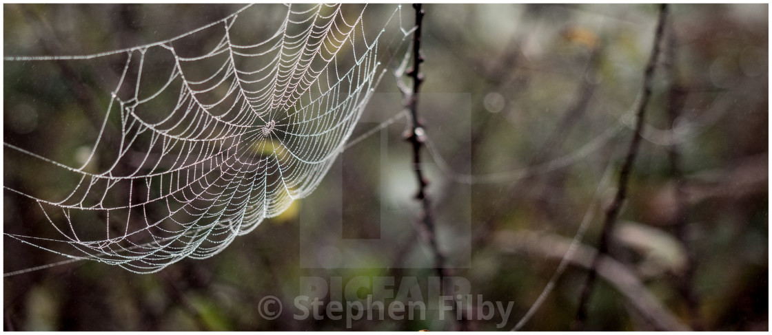 """""""Spiders web number two"""" stock image"""