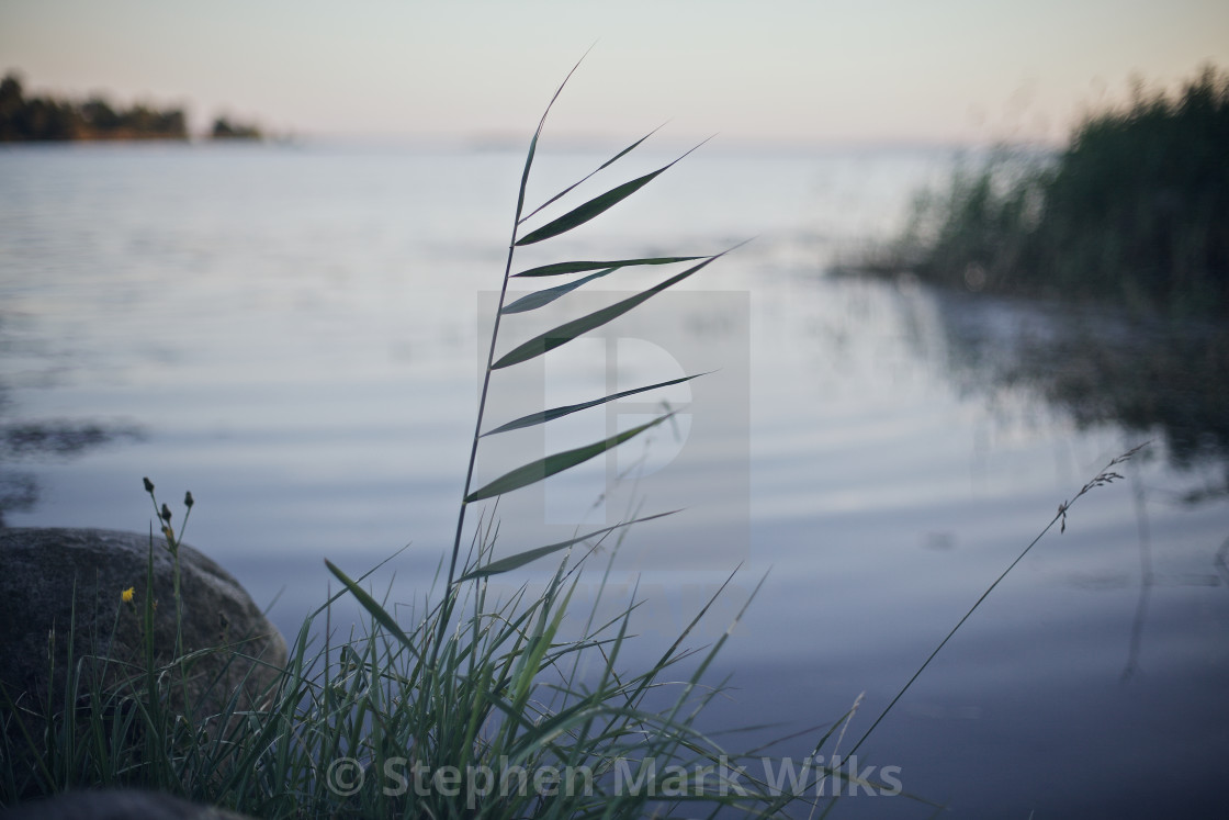 """Swedish Grass"" stock image"