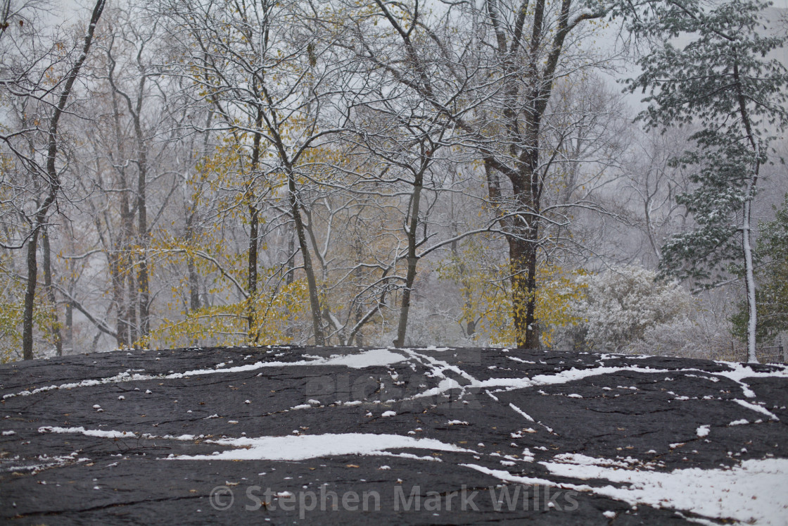 """Central Park Snow"" stock image"