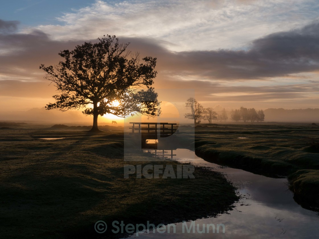 """Sunrise at Longwater Lawn"" stock image"