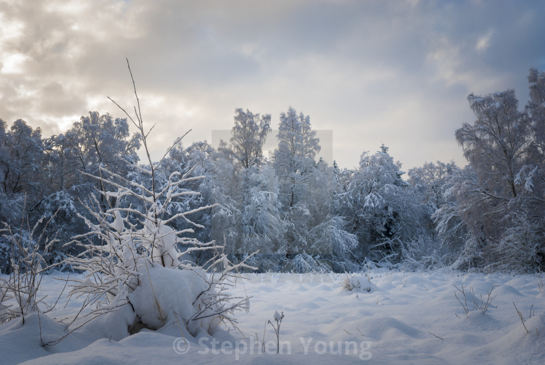 """Winter Wonderland"" stock image"