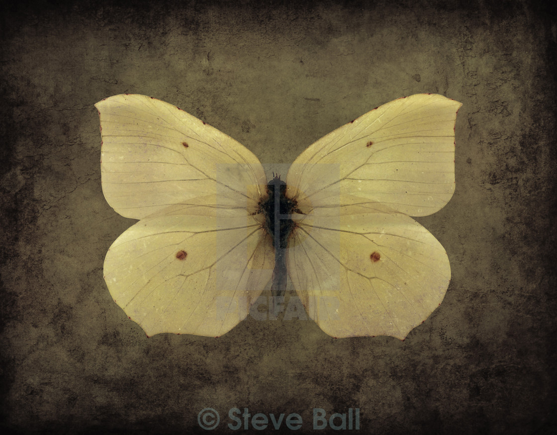 """""""Vintage Butterfly Sepia"""" stock image"""