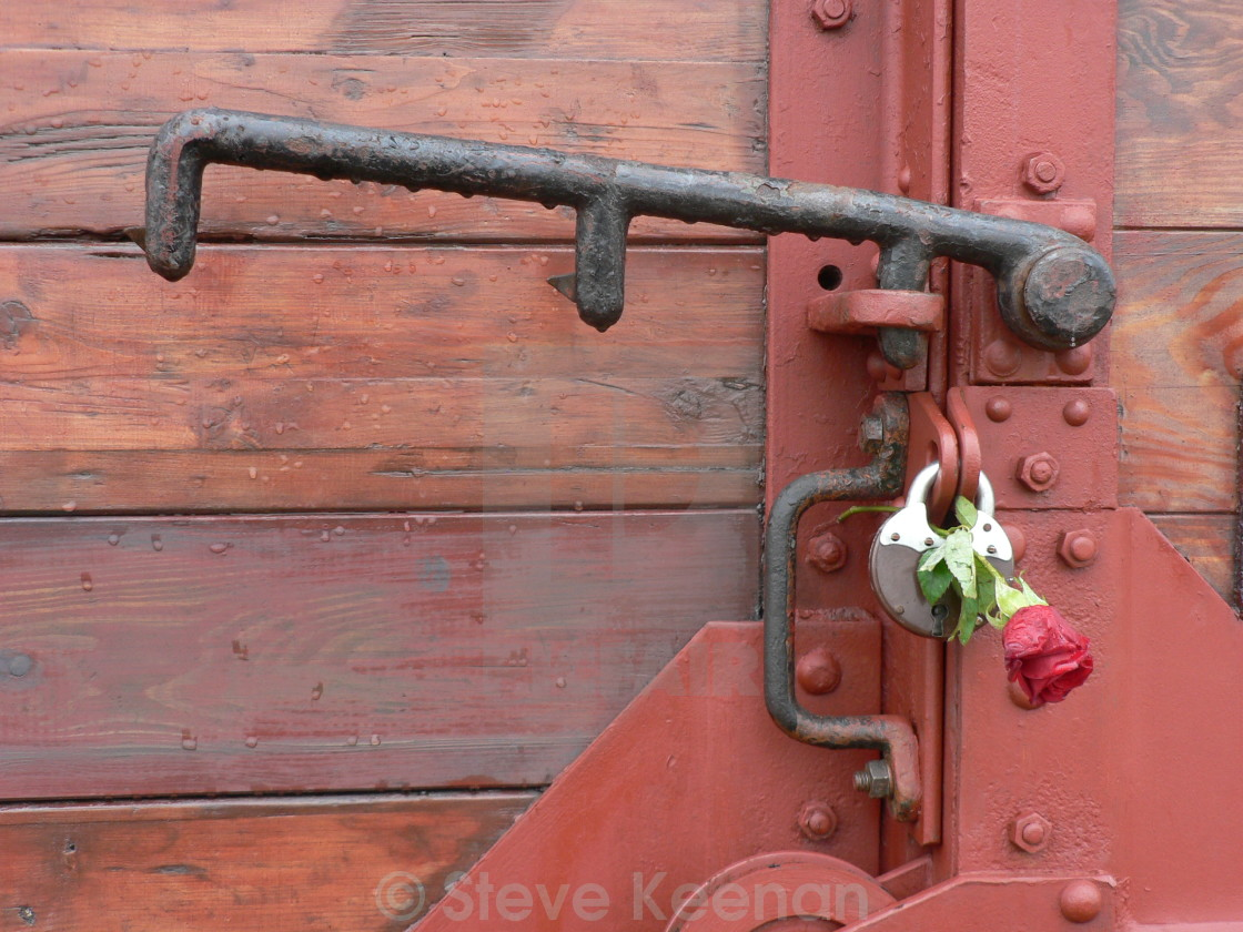 """Auschwitz red rose"" stock image"