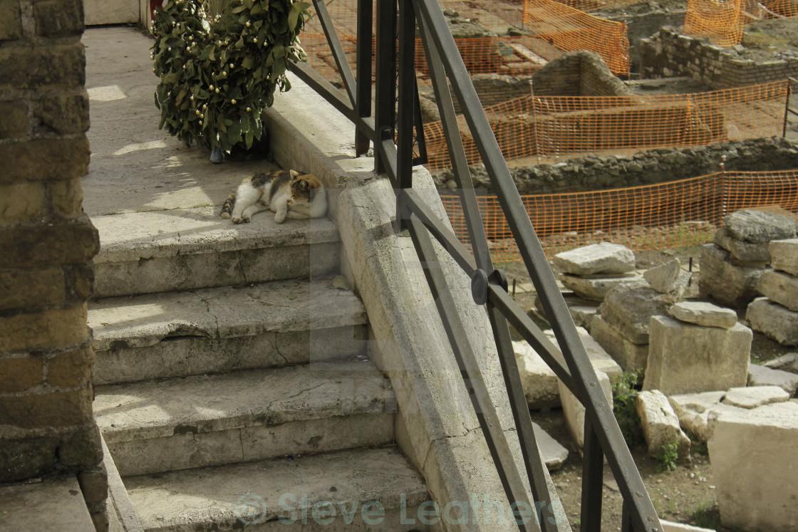 """""""Gatto di Roma"""" stock image"""